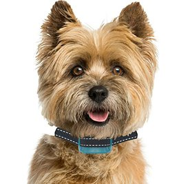 best anti bark collars for small dogs
