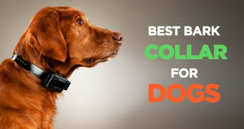 best anti-bark collars for small dogs