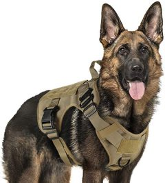Top 10 best harness for large dogs that pull [Reviews & Buying Guide]