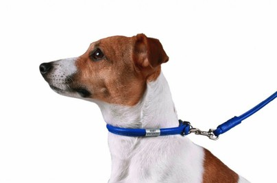 Top 10 Best Rolled Leather Dog Collars for
