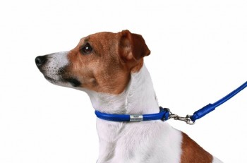 Best Collars For dog