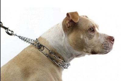 15 Best Prong Collars For Dogs – Unbiased Reviews