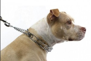 Best Prong Collars For Dogs