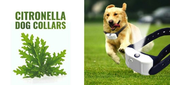 Best Citronella Bark Collars