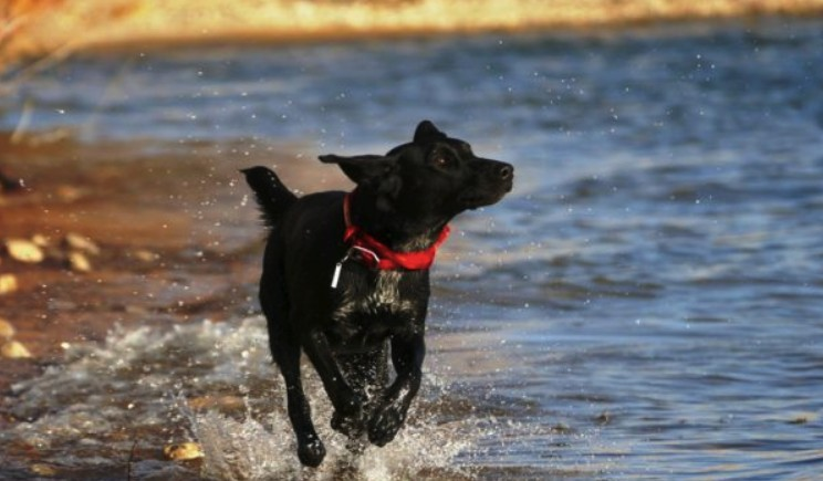 Best Waterproof Dog Collars