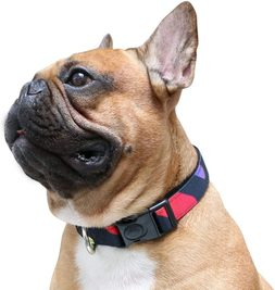 10 Best Collars For French Bulldog [ Reviews & Buying Tips]