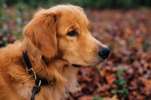 best dog collar for sensitive skin