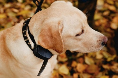 10 Best Dog Training Collar Under 100 [ Reviews & Buying Tips ]