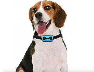 Best Shock Collar For Small Dogs
