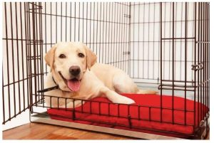 how to choose dog crate