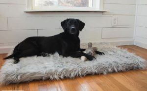How To Buy Dog Bed