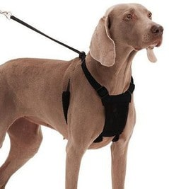 10 Best Dog Harness For Running [ Reviews & Buying Tips ]