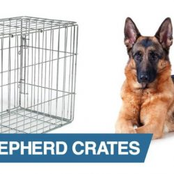 10 Best Crate For German Shepherd [ Reviews & Buying Tips ]