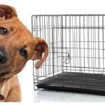 10 Best Dog Crate For Pitbull [ unbiased Reviews ]