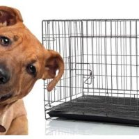 10 best dog crate for pitbull in 2020 [Reviews]