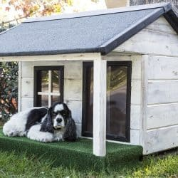 Dog House – The Ultimate Buyer's Guide