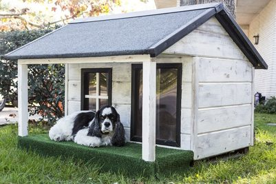 How to Choose a dog House – The Ultimate Buyer's Guide