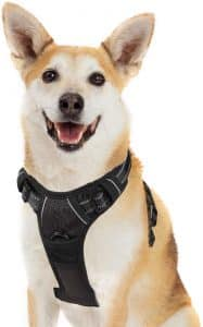Best Harness For Corgi