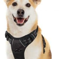 10 best harness for corgi in 2020 [ Reviews ]