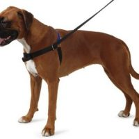 10 best harness for boxer dog in 2020 [reviews]