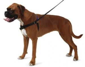 best harness for boxer dog