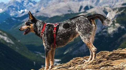 10 Best Dog Harness For Hiking [ Reviews & Buying Guide ]