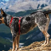 10 best dog harness for hiking in 2020 [ Reviews ]