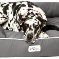 10 Best Dog Bed for Great Dane