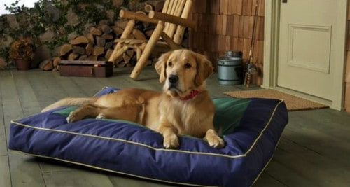 10 Best Dog Beds For Golden Retrievers [ Reviews & Bying Tips ]