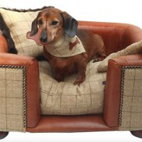 10 Best Dog Beds For Dachshunds