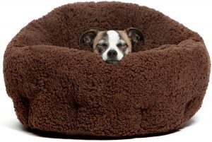 best dog bed for dachshunds