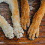 Dry Dog Paws Home Remedies