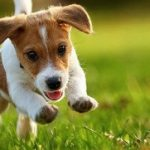 The First Time Dog Owner Checklist