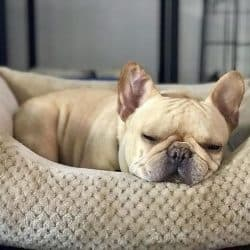 10 Best Bed For French Bulldog
