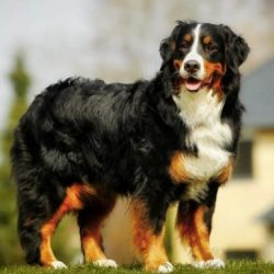 10 Best Bark Collar For Long Haired Dogs