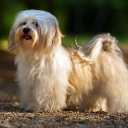 10 Best Shock Collar For Long Haired Dogs