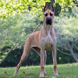 10 Best Shock Collar For Great Dane