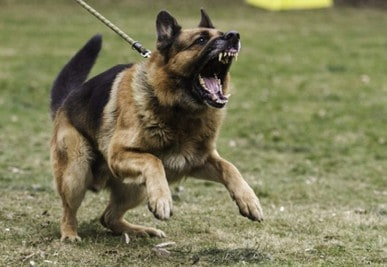 10 Best Shock Collar For Aggressive Dogs [ Reviews & Buying Tips ]
