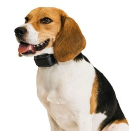 best bark collars for beagles