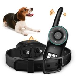 10 Best Shock Collars For Beagles – Unbiased Reviews