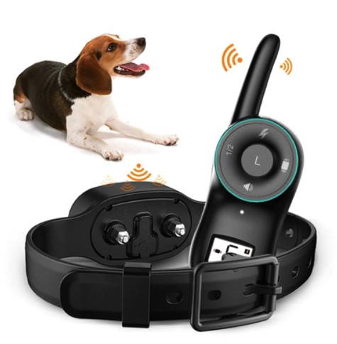 best shock collar for beagles