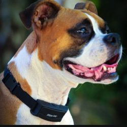 10 best shock collar for boxers – Unbiased Reviews