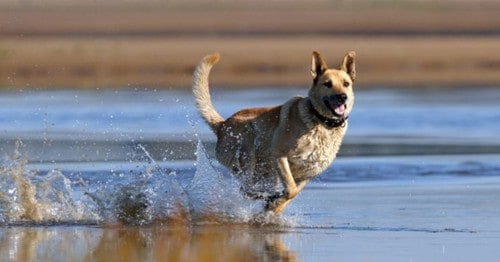 What Is The Least Effective Method To Retrieve A Dog That Has Got Off-Leash?